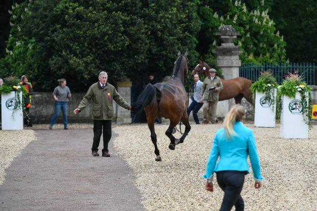 Trade Stands Hoys 2015 : Hoys 2015: ticket information horse & hound