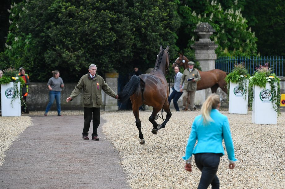 Badminton trot-up 2019
