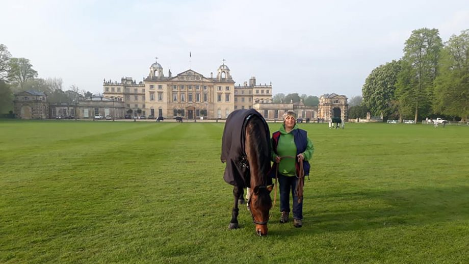 David Britnell's Continuity grazing in front of Badminton house