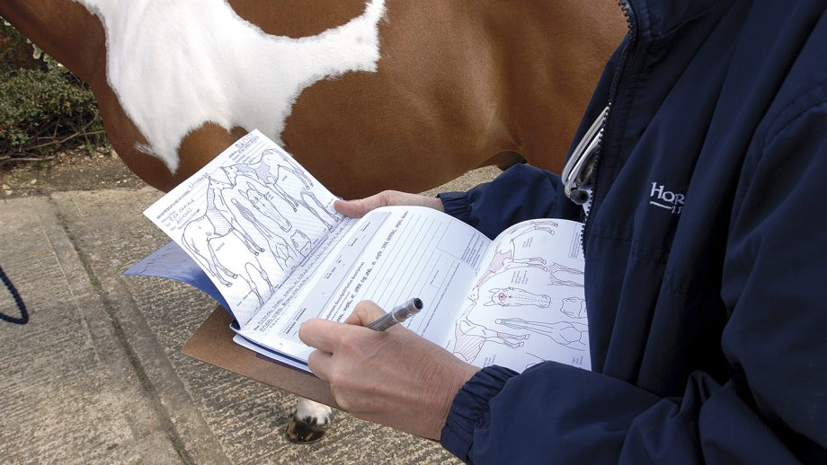 Horse vettings: the pre-purchase vetting is an important part of the horse buying process