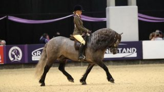 Isobel Lines riding at HOYS