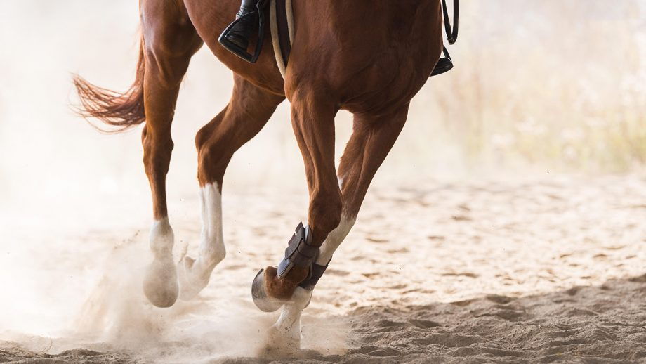 When should we worry about a horse stumbling? *H&H VIP*