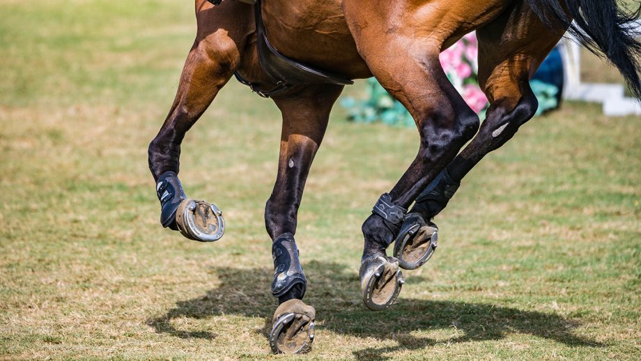 Galloping on hard ground