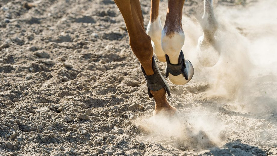 equine herpes virus (EHV) guidelines for competing in the UK