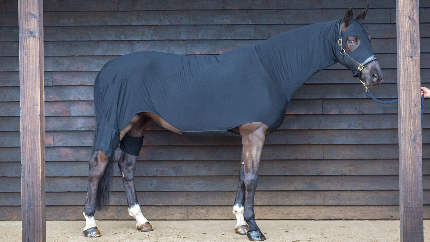 Best shoulder guards 2019: Horse & Hound's tester ranks his favourites