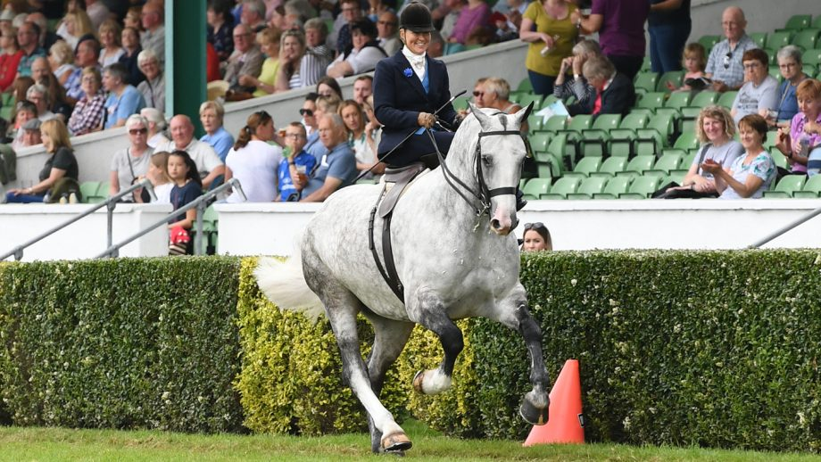 BROOK DALE LIMITED EDITION exhibited by Danielle Heath and owned by Mr G Mears winner of the Ladies Side Saddle during Great Yorkshire Show held at the Great Yorkshire Showground in Harrogate in North Yorkshire in the UK between 9 -11th July 2019