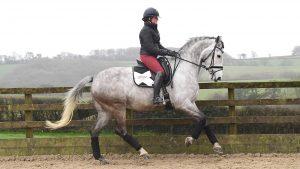 Beth Bainbridge riding Anna Ross's Habouche at home.