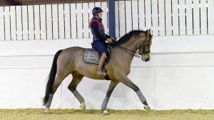 how to improve medium trot Anna Ross riding Delgado in indoor