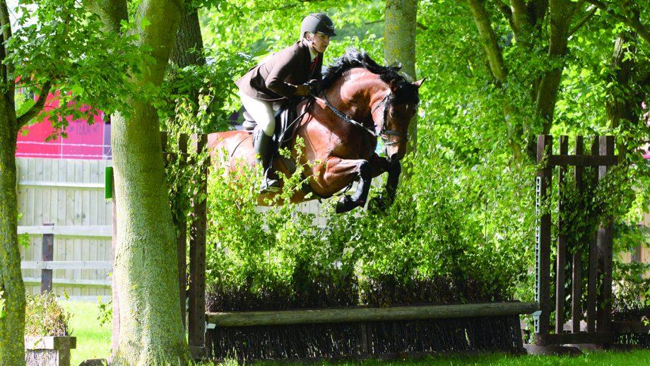 How to teach your horse to jump a bullfinch