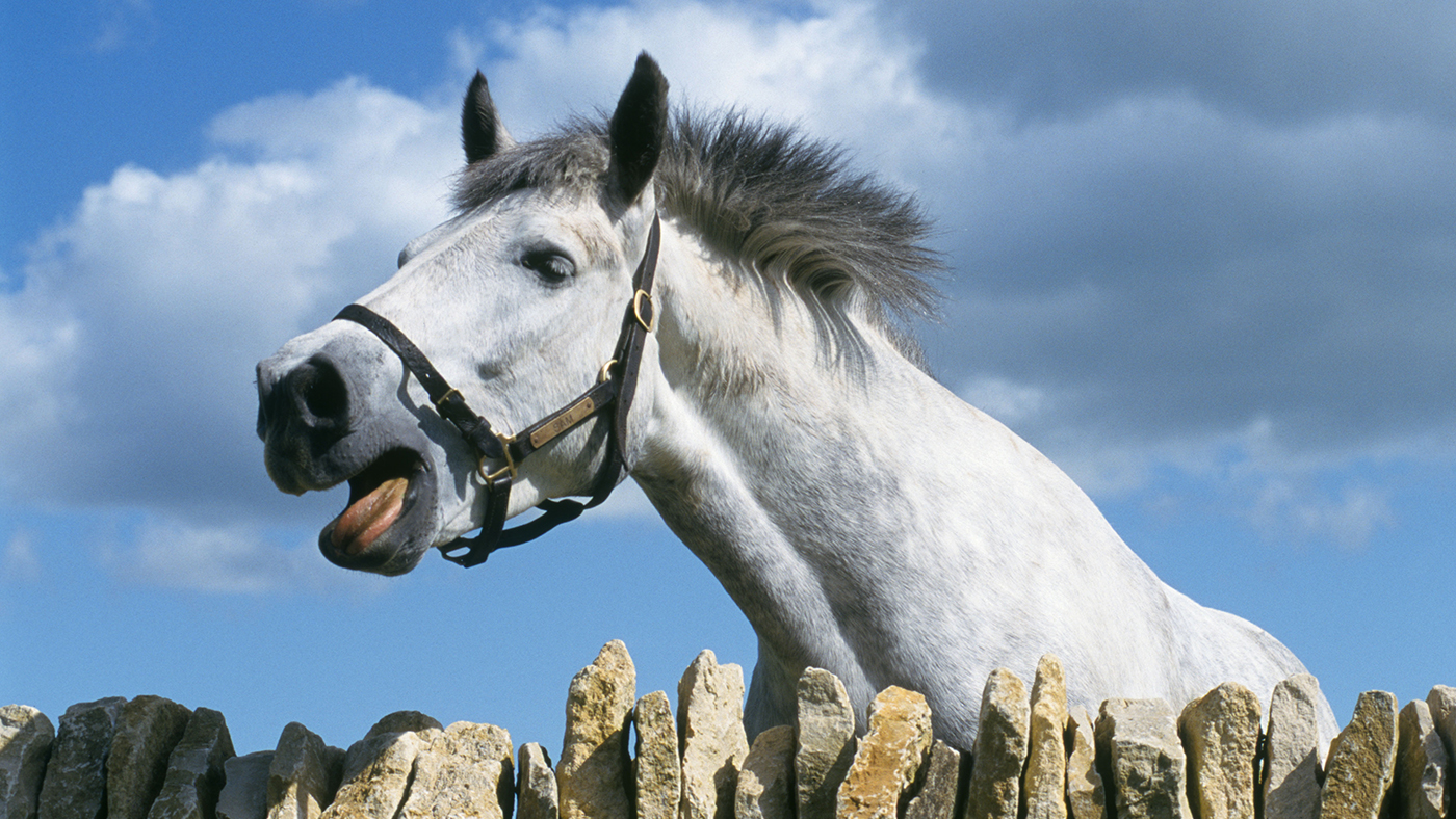 14 questions you always wanted to be able to ask your horse