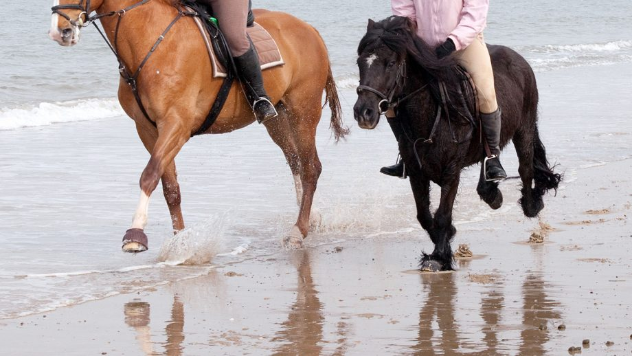 D73PER Three girls riding their horses, galloping on Holkham Beach, north Norfolk Coast, East Anglia UK