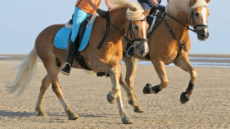 D9RGPP Two riders on back of her Haflinger horses galloping in the mudflat of the North Sea (Germany)