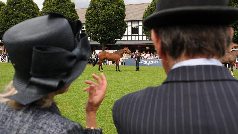 Dublin Horse Show 2021 cancelled
