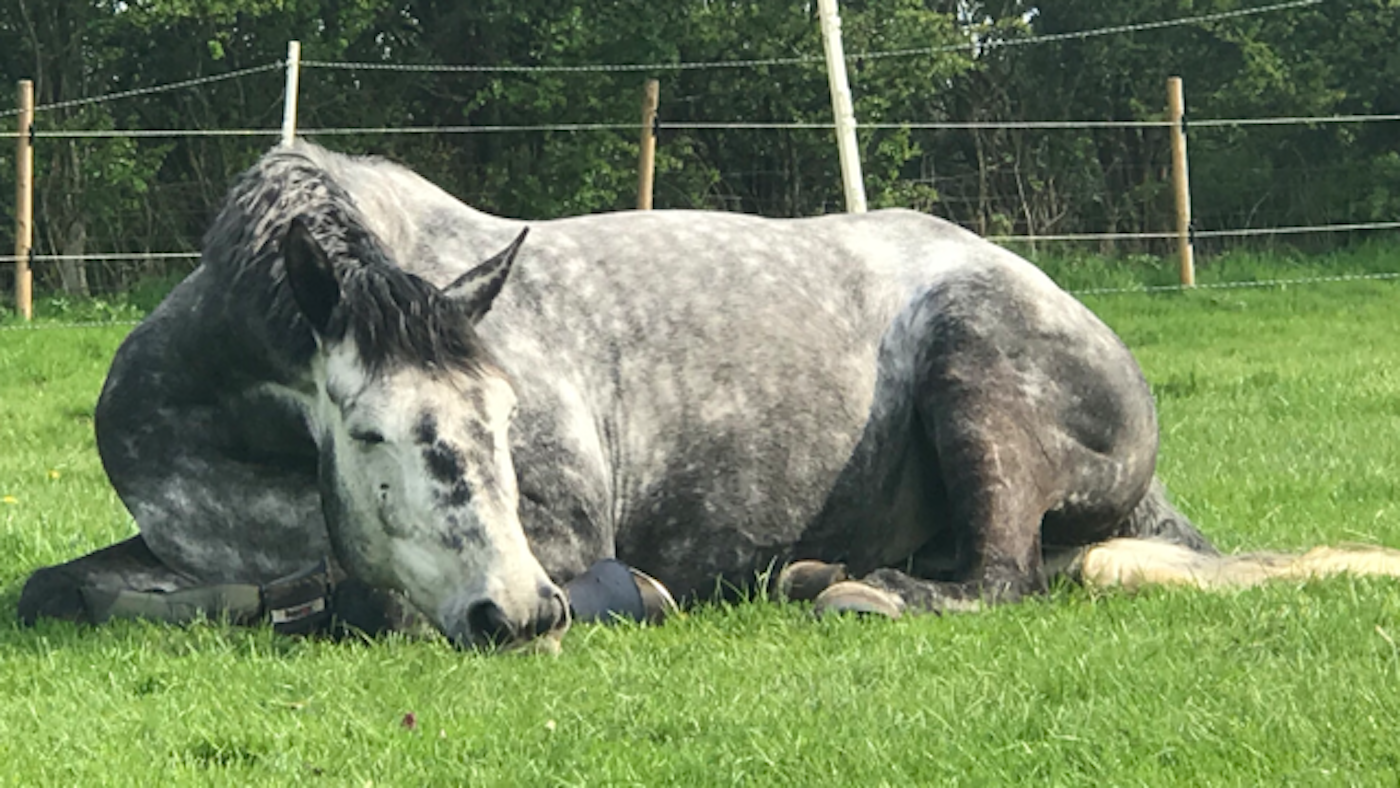 Laid-back mare turns 'guard horse' to disrupt potential burglary