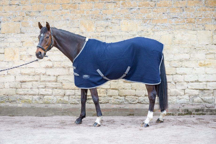 Weatherbeeta Thermic Quilt Standard Neck Cooler Review Horse Hound