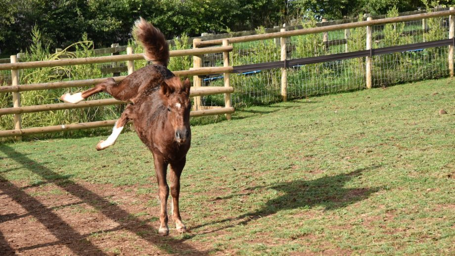Adorable orphan foal enjoys first taste of freedom after battle for life