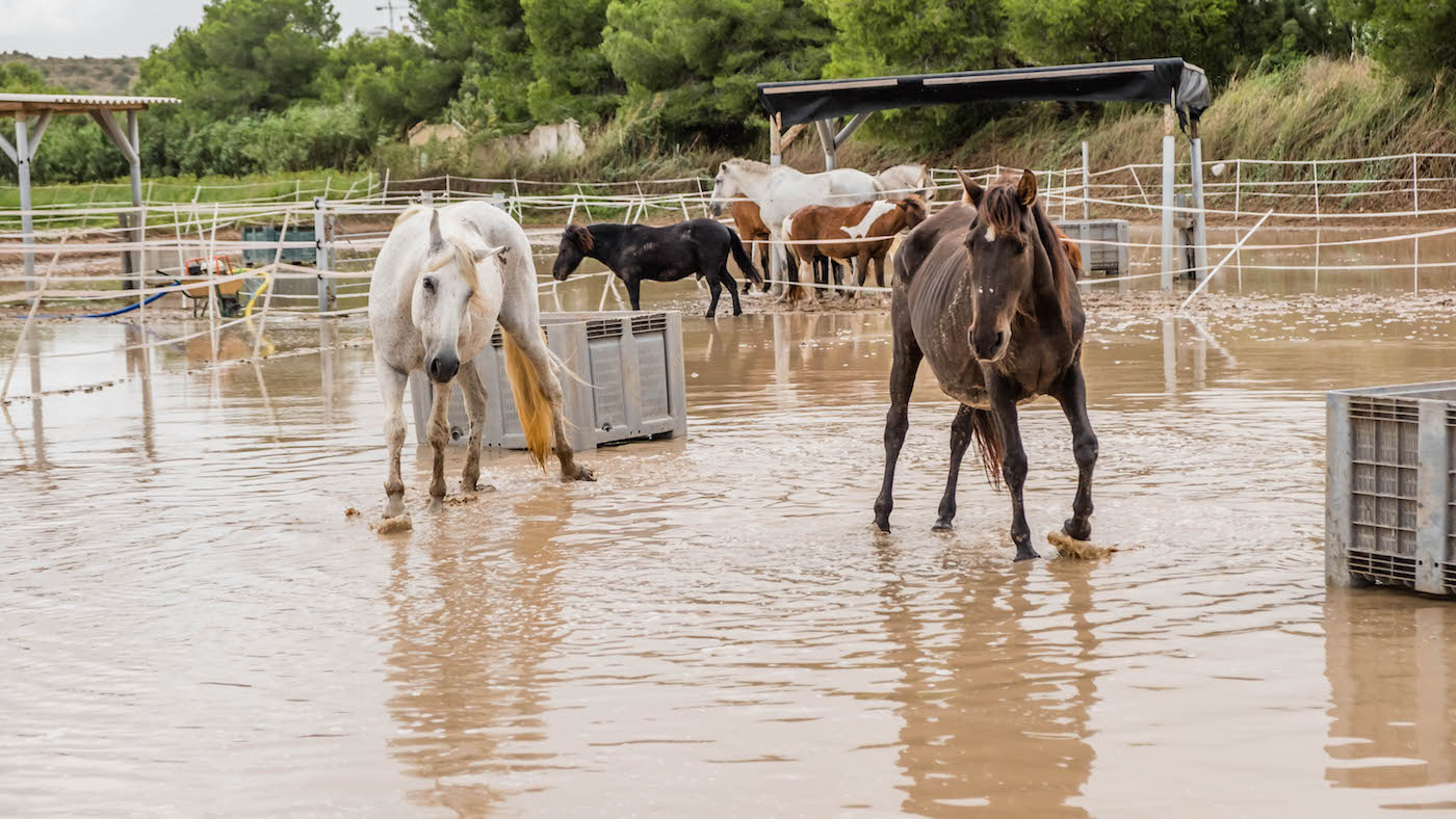 'The nightmare's not over': sanctuary that fought to save horses in floods now deals with the aftermath - Horse & Hound