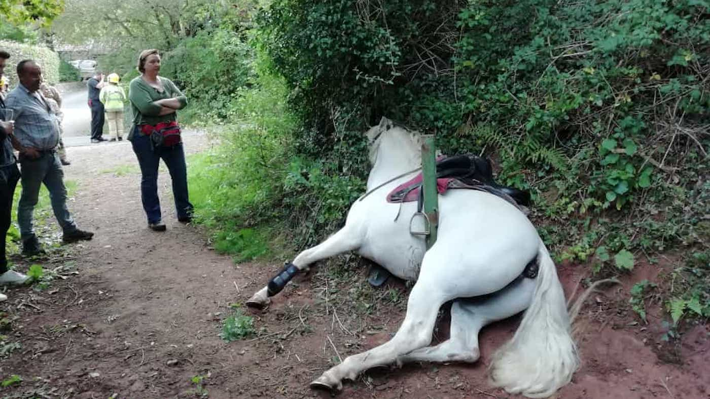 Rider calls for safer access after 'miraculous' rescue of stuck stallion - Horse & Hound