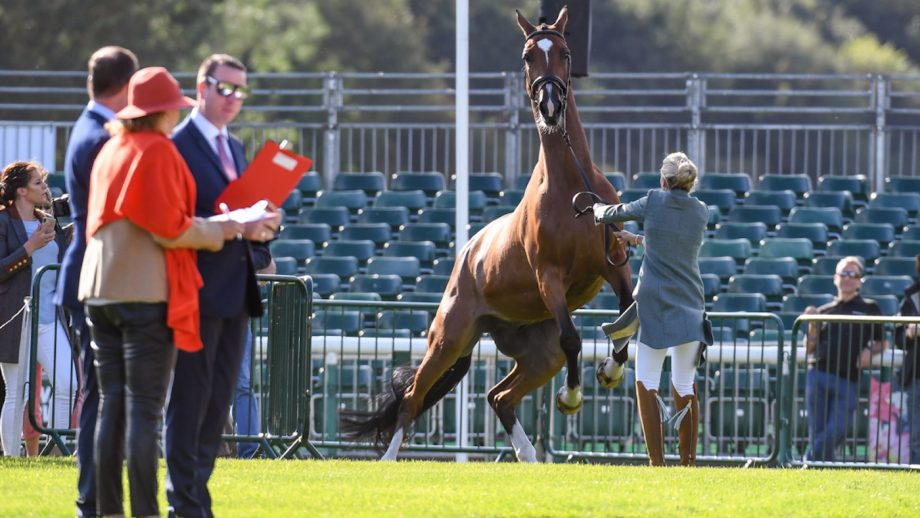 burghley trot-up 2019
