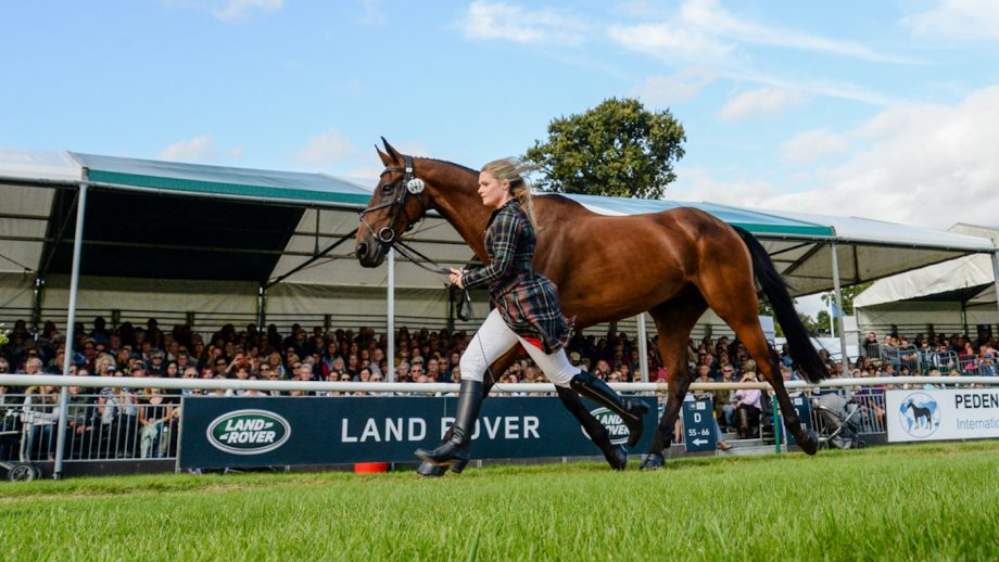 Julia Norman's Burghley first-timer blog: we're finally here and it is amazing