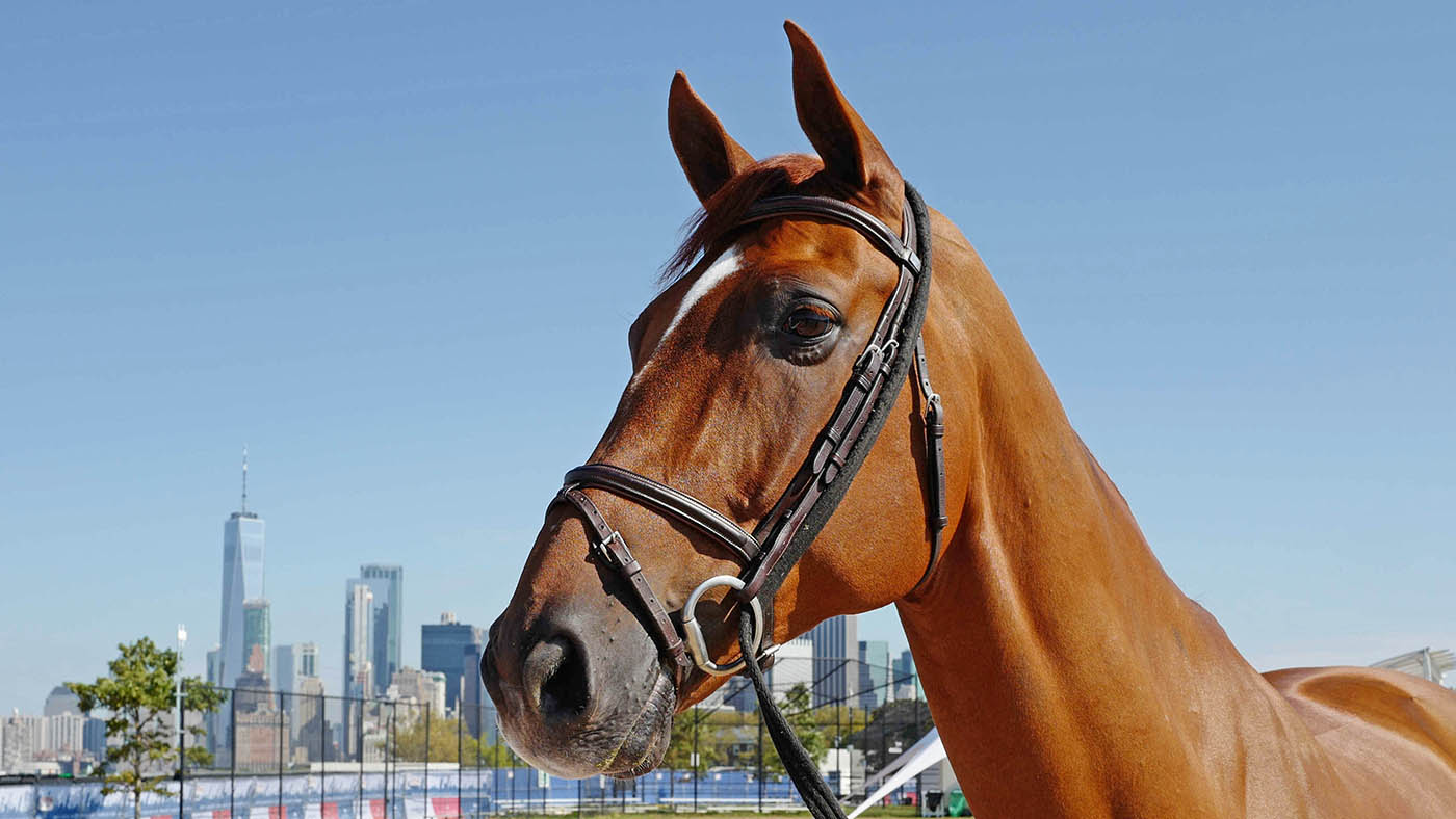140 horses, 2 ferries and 18 months of planning: how this amazing New York island show was born