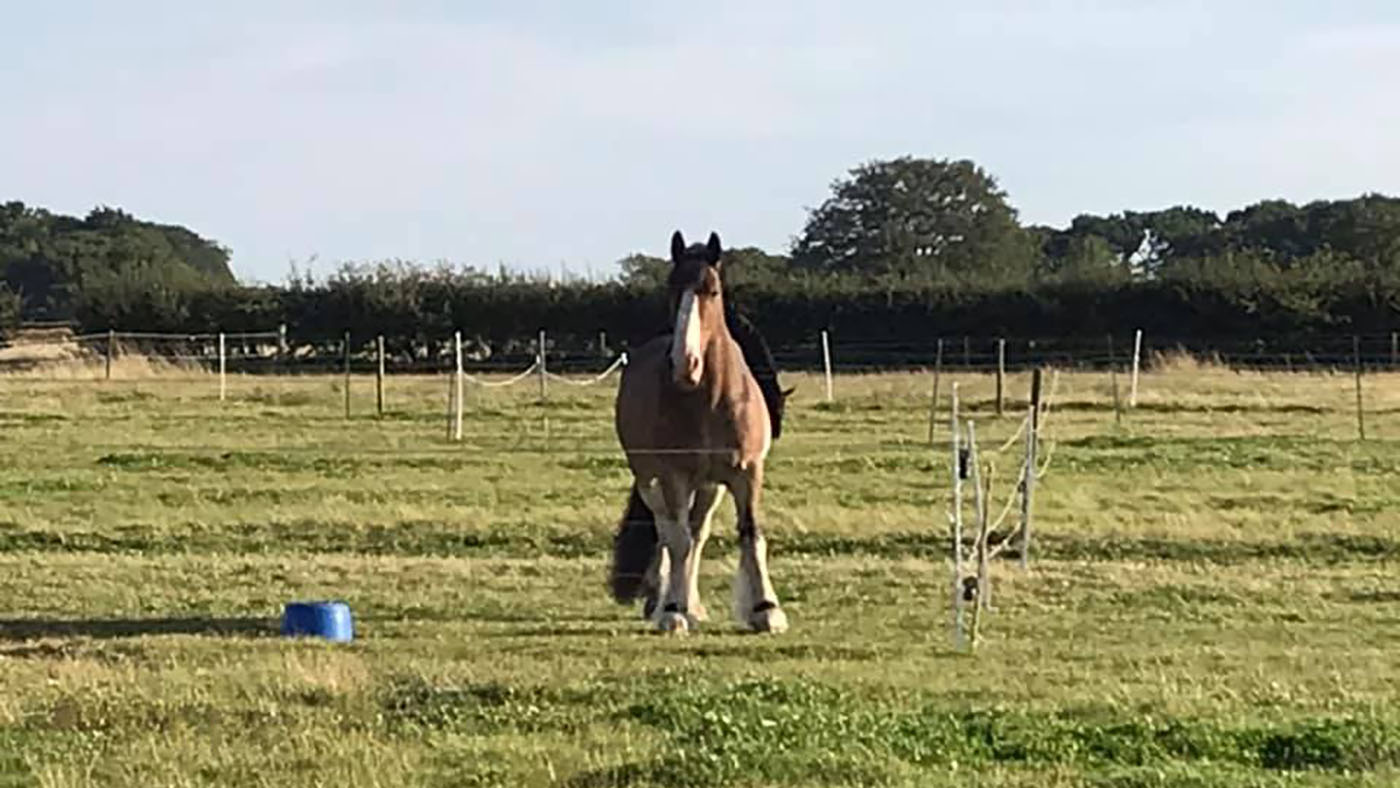 Hovis' Friday diary: 'woe is me, winter is coming' - Horse & Hound