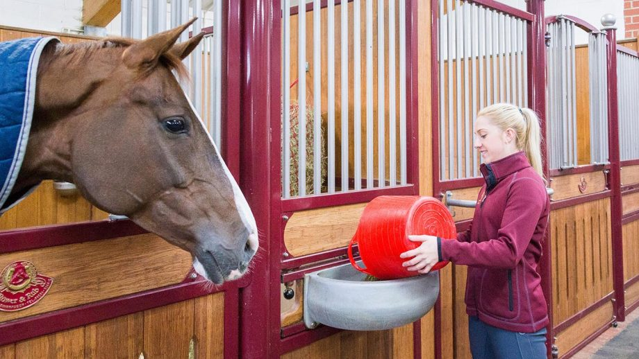 HHD8TB Warmblood Horse. Groom feeding horse in a stable. Great Britain