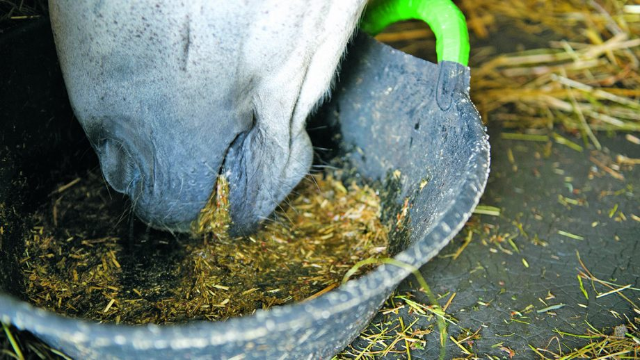 How quickly will a horse gain weight