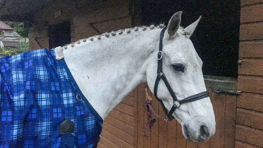 Horse trials cancelled