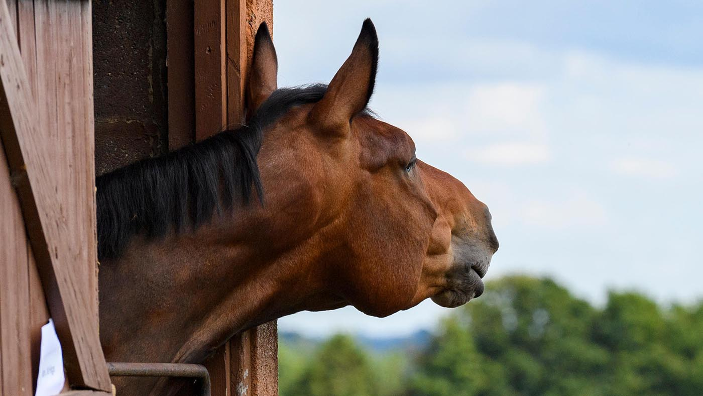 Horse calmers and calming supplements: what's on the market?