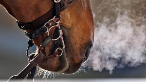 Horses with equine asthma are unable to breathe as well as a healthy horse