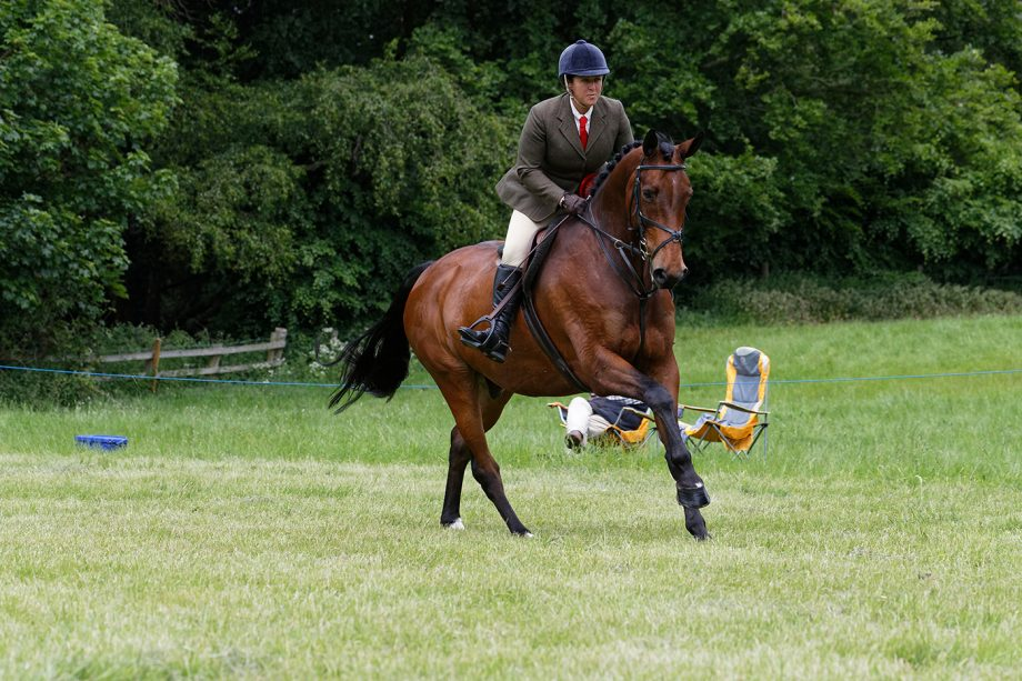 WORKING HUNTER CHAMPIONSHIP CHAMPION 364 BLOOMFIELD INCOGNITO R: Kelly Ward