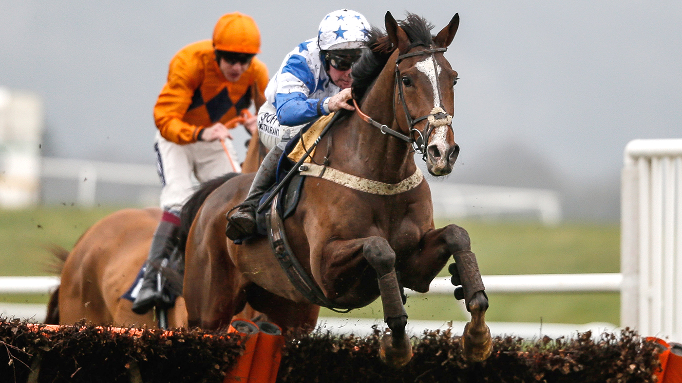 Failed point-to-pointer bought for £300 heads to Cheltenham Festival - Horse & Hound