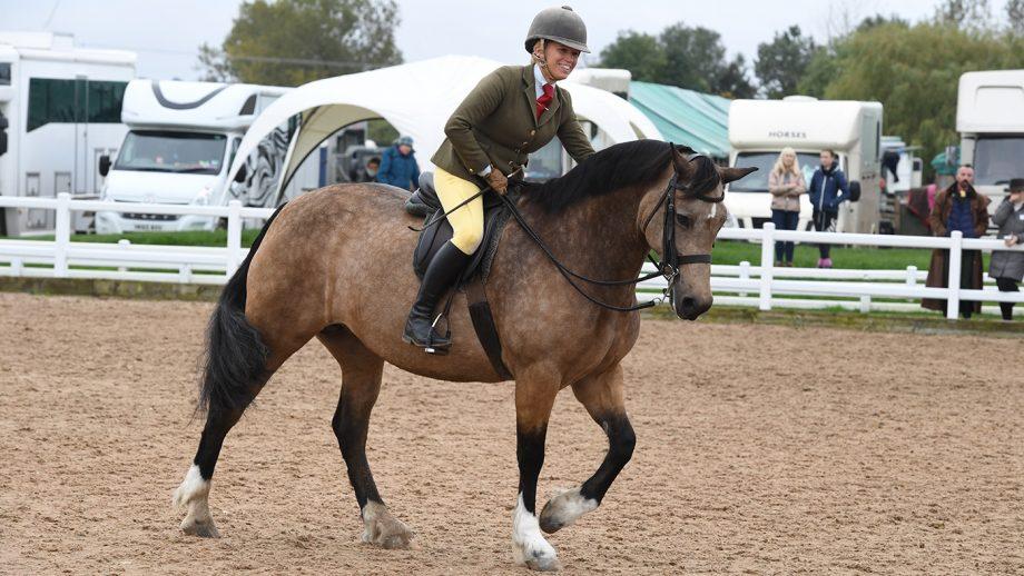 Heritage Show 11.10.19 Olympia Qual. Welsh D No.144 winner Llanarth Fair Lady