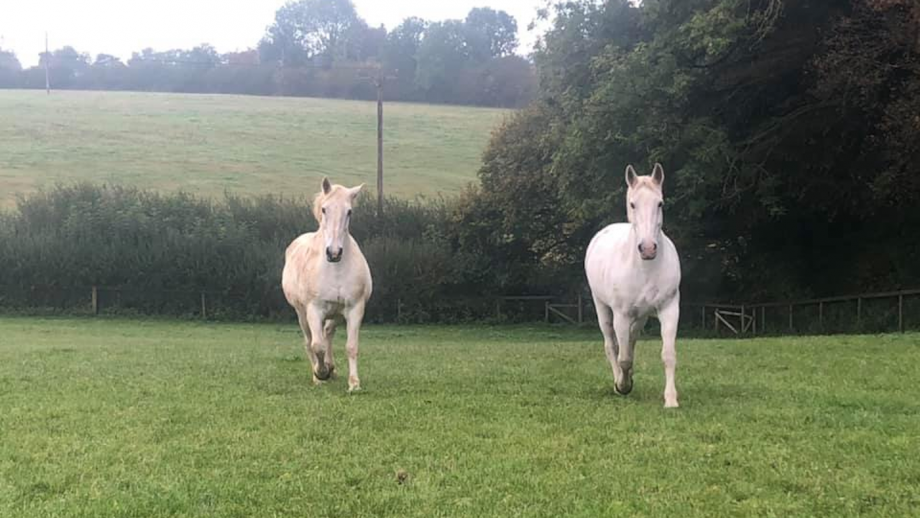 Windsor Grey Royal Mews