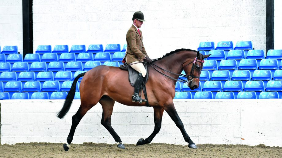 Peter Hodgkinson riding Forever Faberge