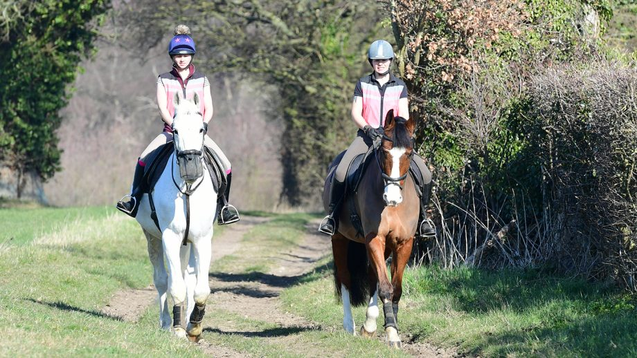Stable yard stock images hacking hack high viz horse training bib bibs from behind, sunny, ridng abreast, hacking out, walking, horse riding off-road on a bridleway bridlepath,bridleway