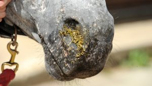 Signs of choke in horses
