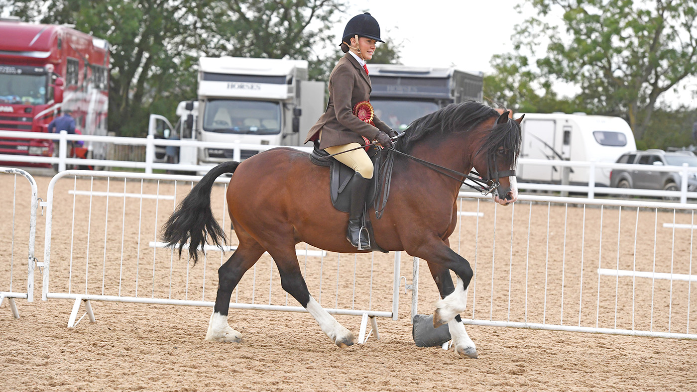 Road To Olympia Watching Malty At Olympia Is On Her Bucket List Home Producer To Make London Debut On Novice Stallion Horse Hound