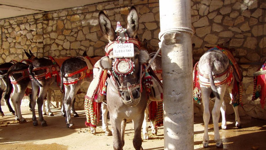 Donkey taxis
