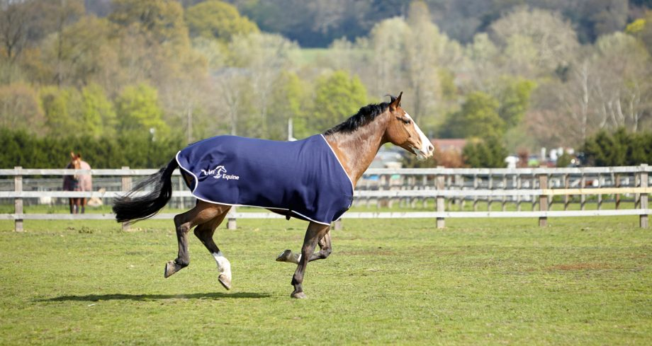 Petplan-Horse-running-in-field