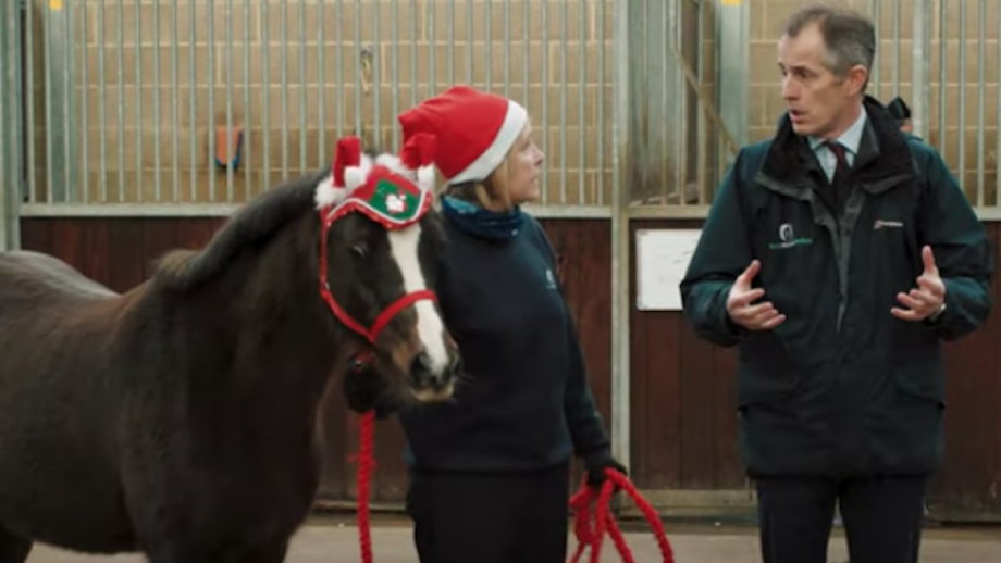 World Horse Welfare Christmas message