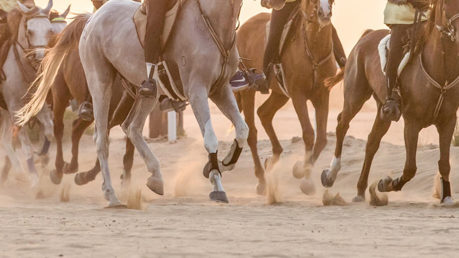 M0N85X Athletic riders competing in a long-distance endurance race in the desert at sunset. Dubai, UAE.