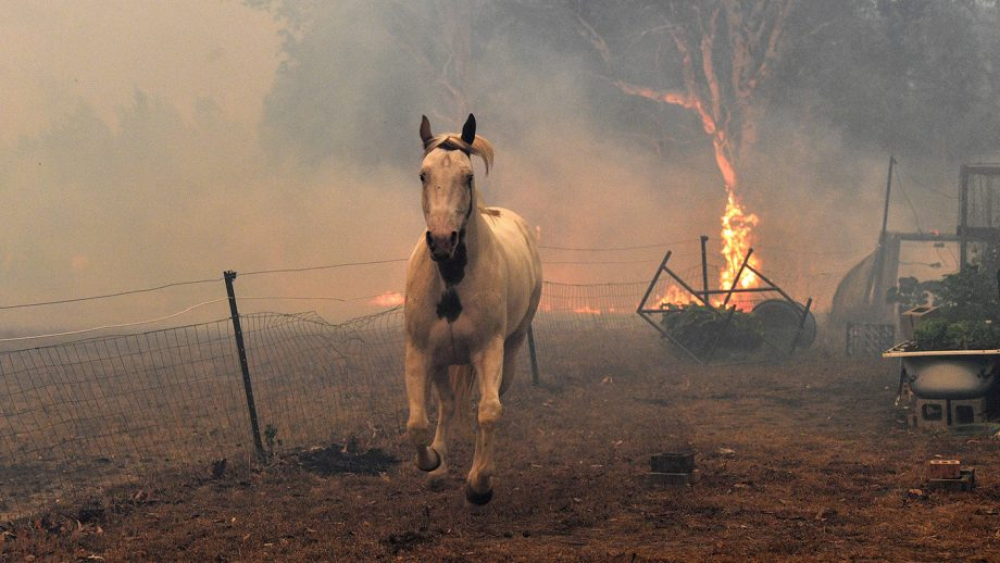 This picture taken on December 31, 2019 shows a horse trying to move away from nearby bushfires at a residential property near the town of Nowra in the Australian state of New South Wales. - Fire-ravaged Australia has launched a major operation to reach thousands of people stranded in seaside towns after deadly bushfires ripped through popular tourist areas on New Year's Eve. (Photo by SAEED KHAN / AFP) (Photo by SAEED KHAN/AFP via Getty Images)