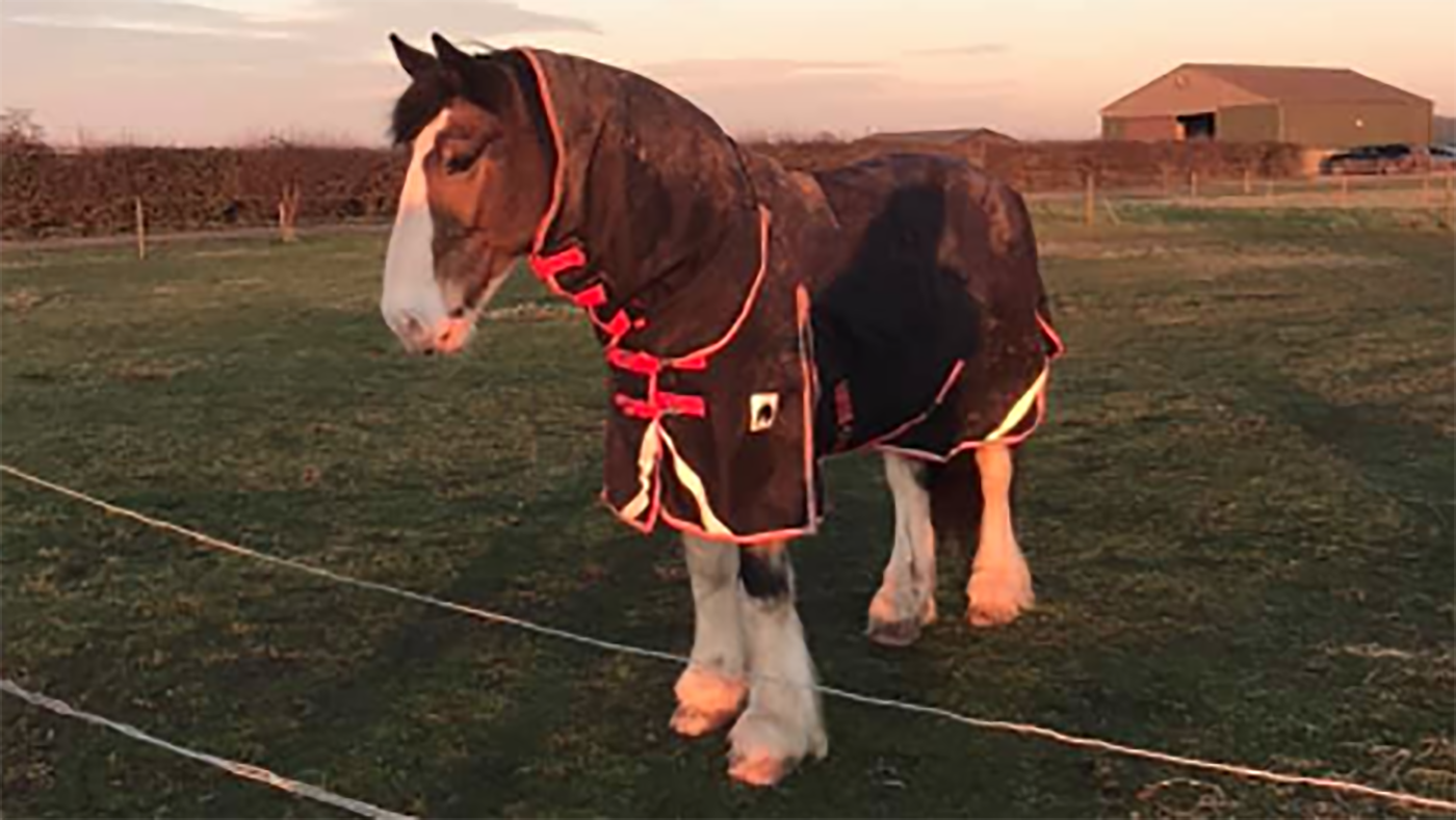 Hovis' Friday diary: fearing for my bum hairs - Horse & Hound