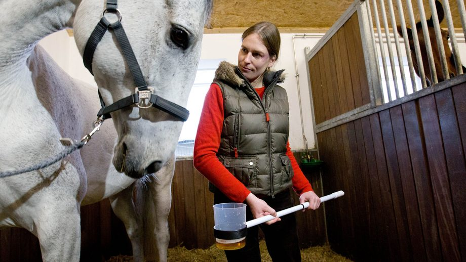 D20G16 Veterinarian Mary-Ann Sommer takes a urine sample duirng the demonstration of horse doping test in a stable in Riesenbeck, Germany, 09 January 2013. The German National Anti-Soping Agency (NADA) and the German Olympic Committee for Equestrian Sport (DOKR) demonstrate the new doping tests for horses at the stable of show jumper Ludger Beerbaum. Photo: Friso Gentsch