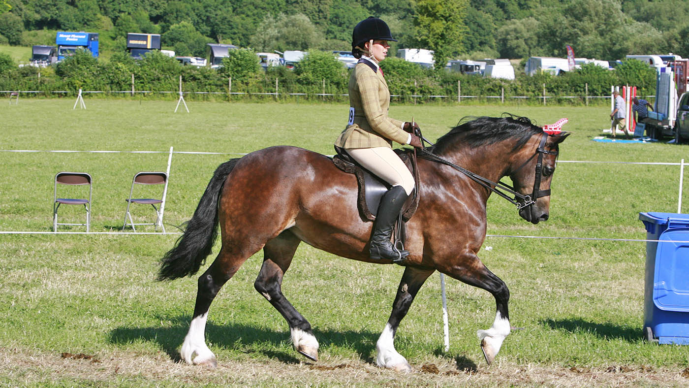 'She was beautiful inside and out': farewell to prolific Welsh section D mare - Horse & Hound