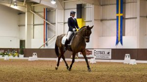 H&H DRESSAGE TRAINING EDRESSAGE NICOLA MCCLURE PRELIM VIDEOS