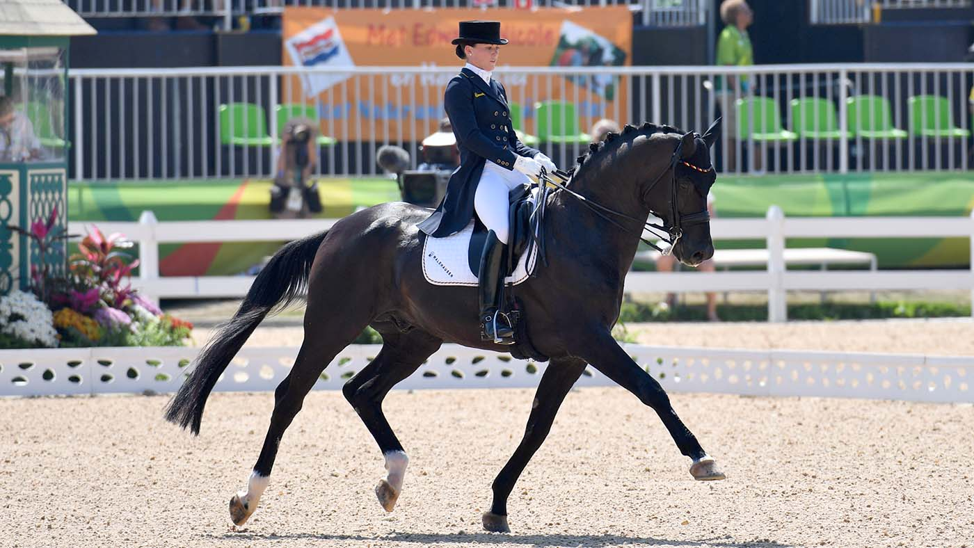 The Best Horse In The World Farewell To Gold Medal Winning Stallion Horse Hound