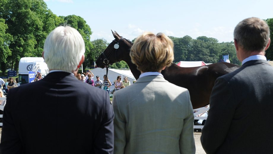 Ground jury at the trot-up